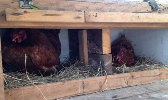 2 chicks.jpg